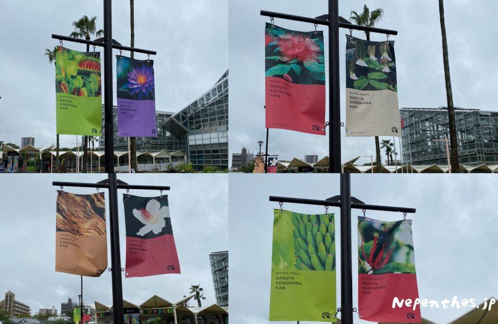 大阪の植物園 咲くやこの花館 イベント虫を食べる植物展2021