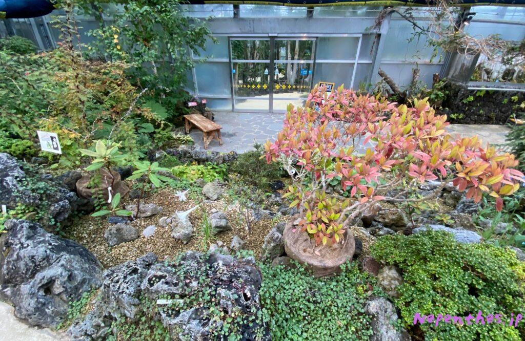 大阪の植物園 咲くやこの花館 イベント虫を食べる植物展2021 Nepenthes.jp