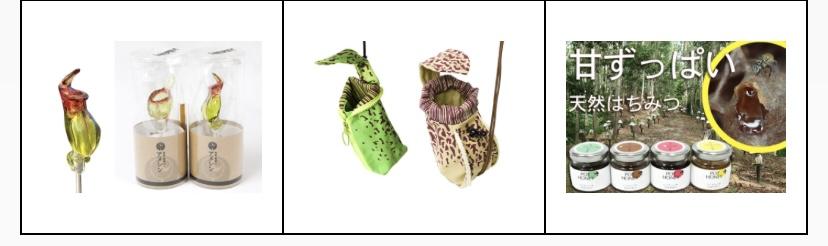 大阪の植物園 咲くやこの花館 イベント虫を食べる植物展2021 Nepenthes.jp イベント2