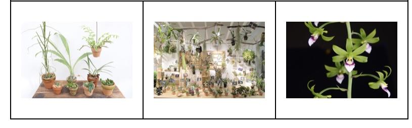 大阪の植物園 咲くやこの花館 イベント虫を食べる植物展2021 Nepenthes.jp イベント9