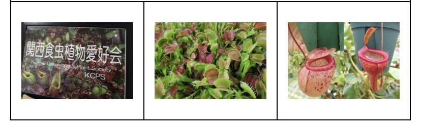 大阪の植物園 咲くやこの花館 イベント虫を食べる植物展2021 Nepenthes.jp イベント11