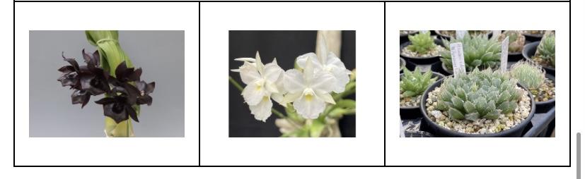 大阪の植物園 咲くやこの花館 イベント虫を食べる植物展2021 Nepenthes.jp イベント12