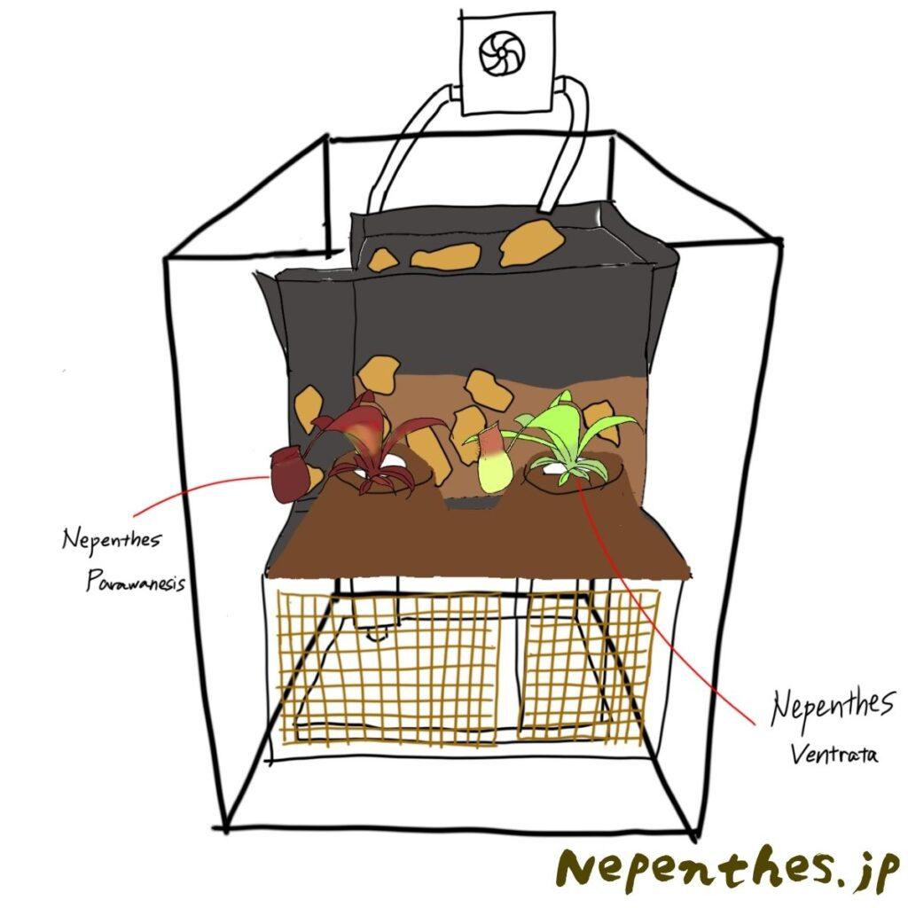 ネペンテス×滝のアクアテラリウムを作る 作業図4